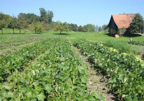 Weniger Bauernhöfe, aber Rückgang verlangsamt