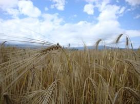 Kleinbauern-Vereinigung lehnt Revision des Gentechnikgesetzes und der Koexistenzverordnung ab
