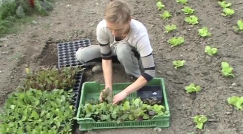 Crowdfunding: Biogemüse direkt ab Hof