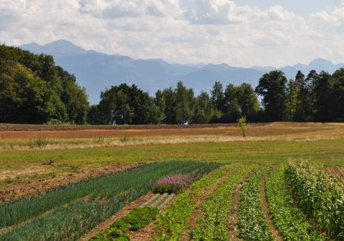 Agrobiodiversität muss gestärkt werden