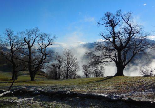 Tessiner Landwirtschaft: Der Süden reizt und fordert